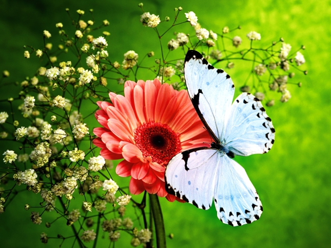 Pink_Flower_and_Beautiful_Blue_Butterfly